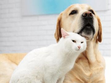 Royal Canin voer vanaf €4,19 bij Zooplus